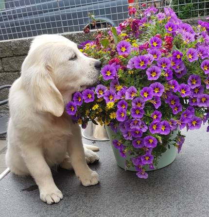 holly in de bloemen