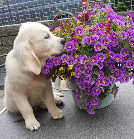 holly in de bloemen